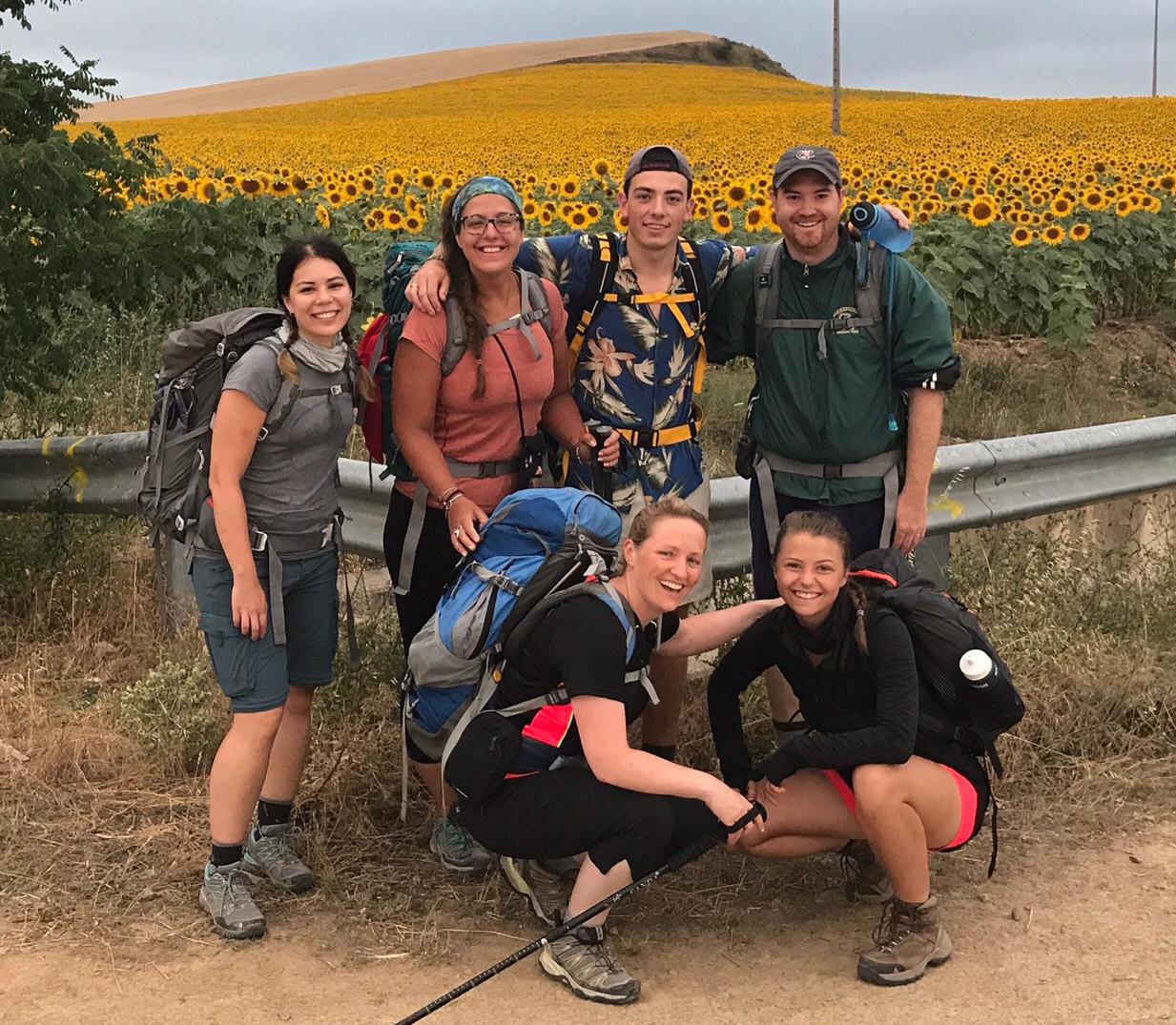 Camino Sunflowers