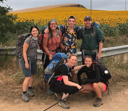 Camino Sunflowers